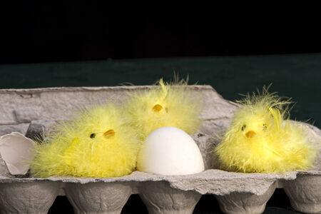 faux: Faux simpatici pulcini sfocato esplorare e seduta in cassa di uova con l'uovo Archivio Fotografico