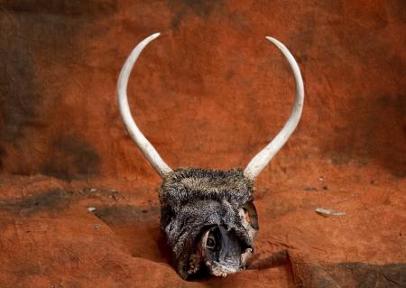 Spike Antlers on Deer Skeleton Stok Fotoğraf