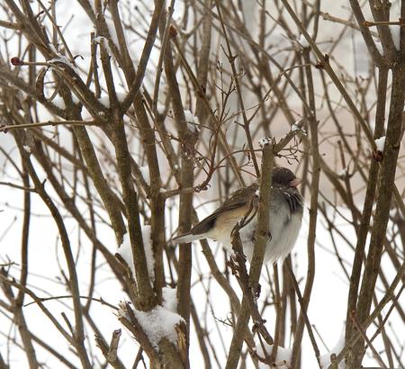 Bird in branches