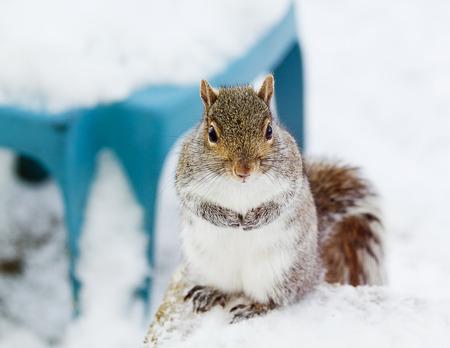 Adorable Squirrel looking Stok Fotoğraf