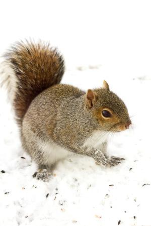 Watchful squirrel