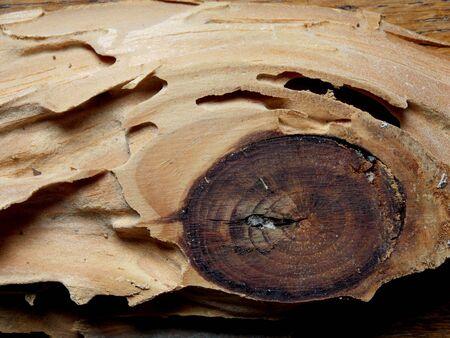 ruination: Termite Damage