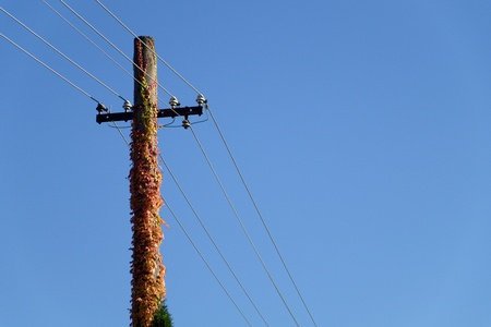 isolator: power pole covered with colored leaves