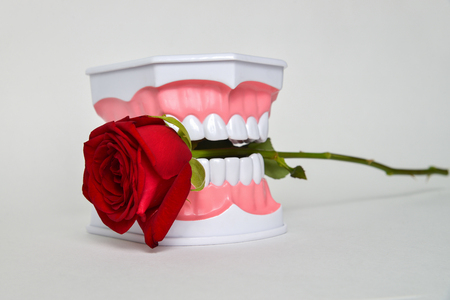 mouth smile: Dental jaw and rose flower