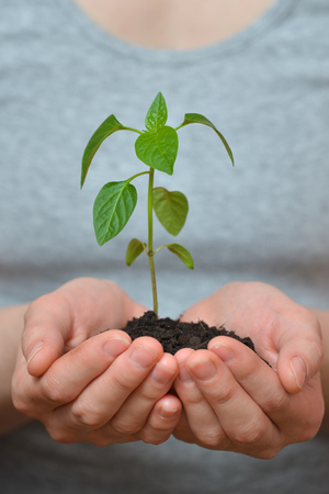 Woman hands holding young plant in fertil soil. Ecology concept