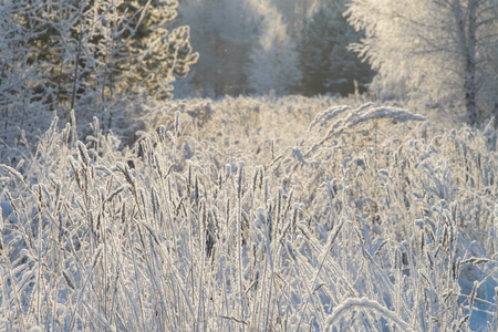 Winter wonderland. Grass in frost on the background of snowy forest. Banco de Imagens