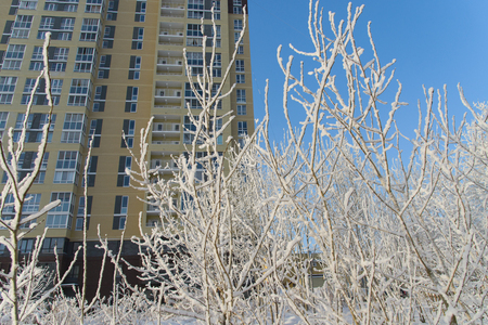 City winter scene, trees covered with snow and residential high rise apartment building at background.