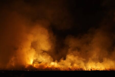 Massive forest fire at night, terrific view and background