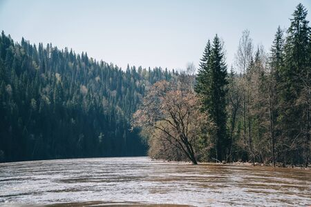 Flooding of river in spring after fast melting of snow. Flood in forest.