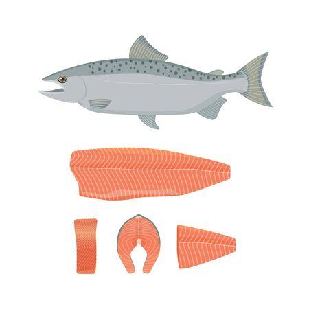 salmon fillet: Salmon fish vector illustration. Raw fish, slice, steak, fillet. Flat style.