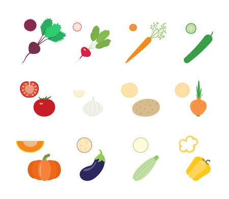 squash: Vegetables and vegetable slices: beetroot, radish, carrot, cucumber, tomato, garlic, potato, onion, pumpkin, eggplant, squash, pepper Illustration