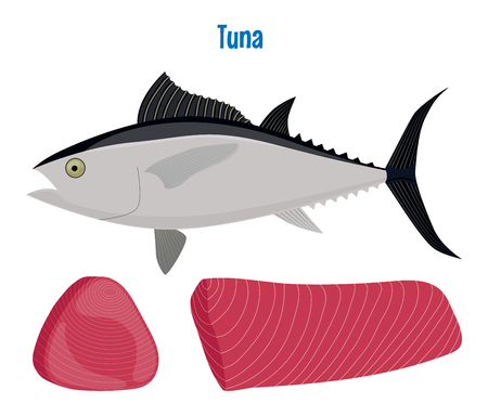 Vector illustration of tuna. Sea fish steak or fillet isolated on white