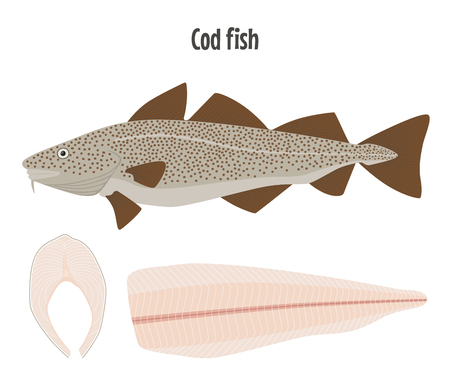 Cod fish alive, steak and fillet. Vector illustration isolated on white.