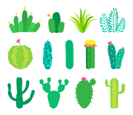 Set of cactuses and succulents. Vector illustrations. Çizim