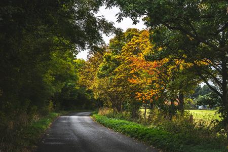 Misteriosa carretera pavimentada vacía huyendo con rizo entre frondosos árboles con colorido follaje otoñal, Oxford, Reino Unido