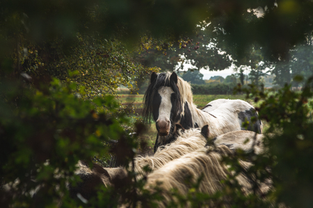 View through foliage of gorgeous domestic horses on green field in countryside of Oxford, United Kingdom