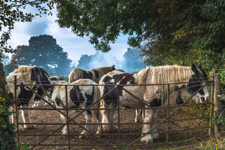 View through foliage of gorgeous domestic horses on green field in countryside of Oxford, United Kingdom Standard-Bild - 121884191