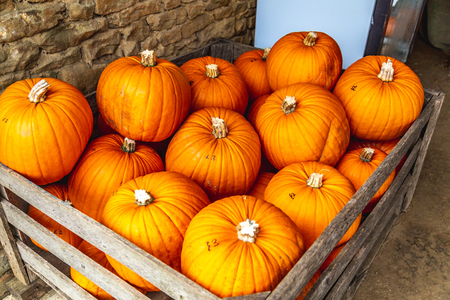 Vibrant orange harvested pumpkins in wood box for sale on country market in Oxford, United Kingdom