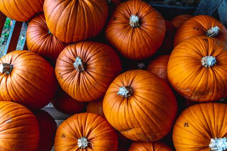 Vibrant orange harvested pumpkins in wood box for sale on country market in Oxford, United Kingdom Standard-Bild - 121884197