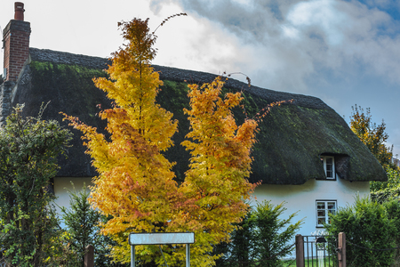 Aged rural house with golden trees on yard and roadsign with street name, Oxford, United Kingdom 免版税图像 - 121893423