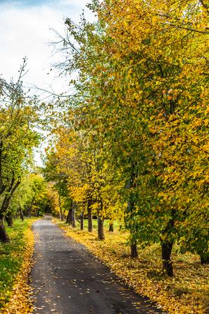 Empty narrow alley road with trees in bright autumnal foliage, Oxford, United Kingdom Standard-Bild - 121884333