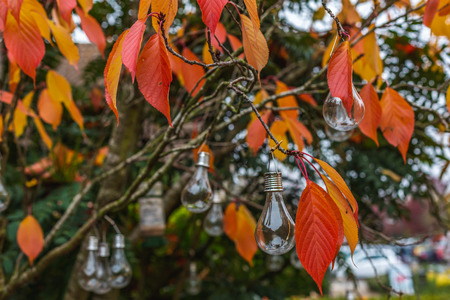 Creative decoration with light bulbs hanging on tree with autumnal colorful foliage, Oxford, United Kingdom 免版税图像 - 121884361