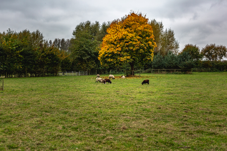 Autumnal country paddock lawn with colorful trees and pasturing cattle, Oxford, United Kingdom Standard-Bild - 121884388