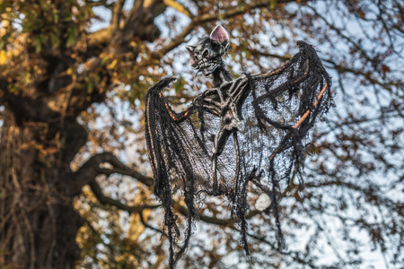 From below of spooky Halloween decoration of bat skeleton hanging on tree outdoors