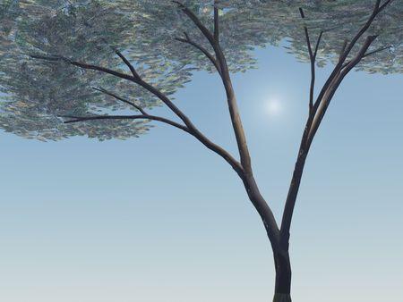 Paraplu Acacia Tree
