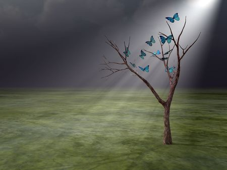 Butterflies in Godrays  - A flight of butterflies in godrays after storm around alone tree.  Stockfoto