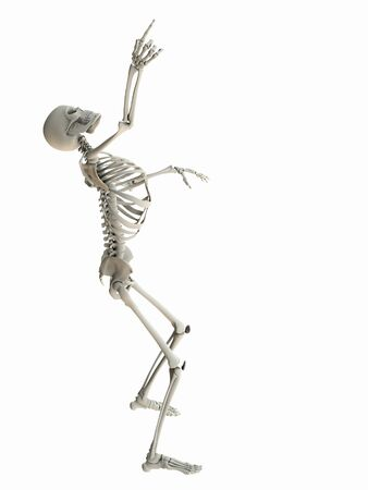 human skeleton: Isolated skeleton standing looking up pointing at white copy space.