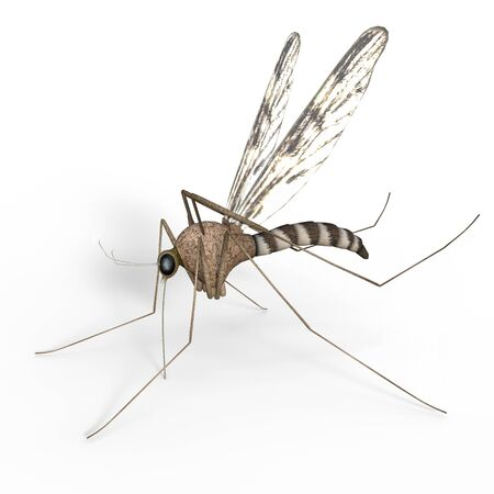 An isolated digital mosquito on white background, 3d Illustration. Фото со стока