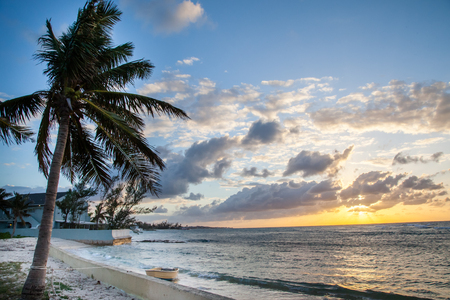 A peaceful sunset is welcomed by a palm tree at the oceans edge in Bahamas
