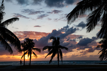 The palm treens are a silhouette in the sunset as a person watches the ocean waves