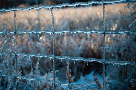 얼음 폭풍이 터지면 울타리와 나무가 얼음층으로 덮여 모든 것에 서리가 내립니다.