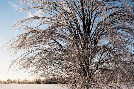 얼음 폭풍이 터지면 나무는 얼음층으로 덮여 모든 나뭇 가지에 햇볕에 쬐인 빛을 보입니다.