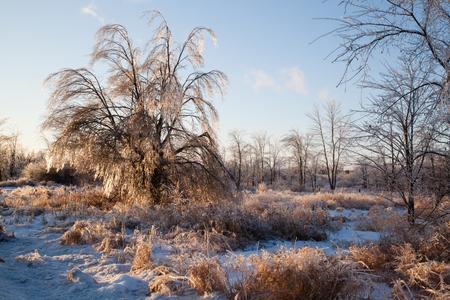 얼음 폭풍이 닥치면 나무와 풀이 얼음층으로 덮여 햇볕이 비치고 서늘한 모습을 보입니다. 스톡 콘텐츠
