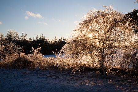 얼음 폭풍이 몰아 치면 나무와 관목이 얼음 층으로 덮여 모든 지점에서 햇볕에 쬐인 빛을 보입니다.