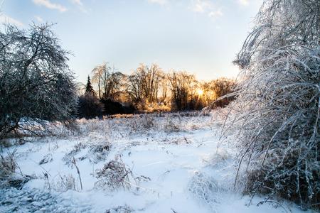 얼음 폭풍 후에 나무와 관목이 얼음 층으로 덮여 있습니다.