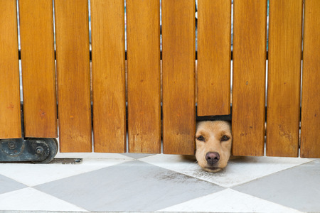 trapped: The brown dog was trapped in the house