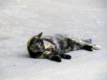 cute cat lies on the pavement on the street . Stock photo