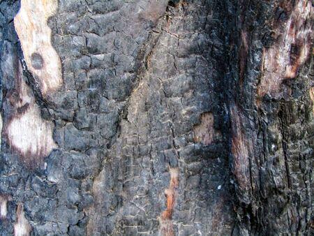 black burnt tree. close up stock photo