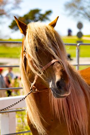 A brown horse in metallic pen Stock Photo