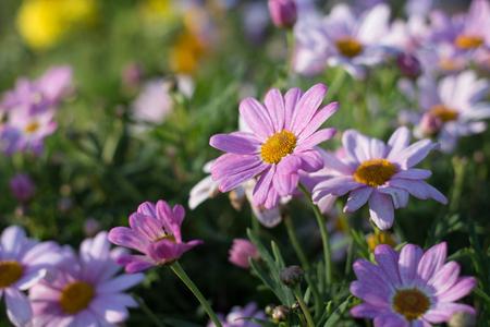紫の花のクローズ アップ