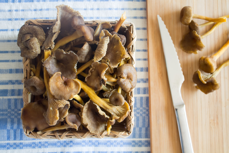 Some Funnel Chanterelle mushrooms in baskets next to cutting board on a tablecloth Stock fotó