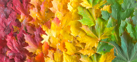 Green, yellow and red Maple leaves on ground Imagens