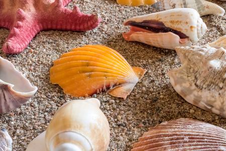 Various seashells on sand Imagens