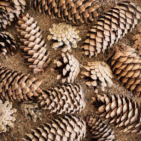 Pine and spruce cones on sand Imagens