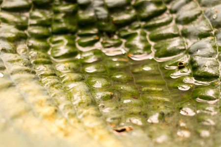 Closeup of water on a green leaf Imagens