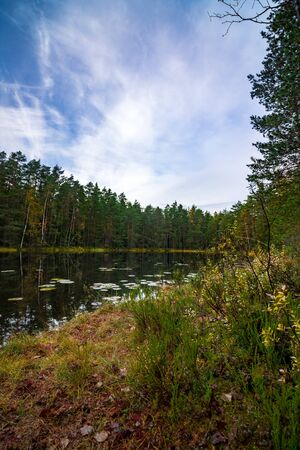 View of a lake in forest on autumn day Imagens